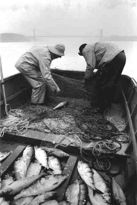 Hudson River shad fishermen