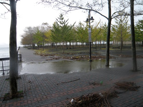 Pier A Park at Hoboken's South Waterfront; trees still standing.