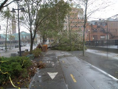 pier a tree down 1